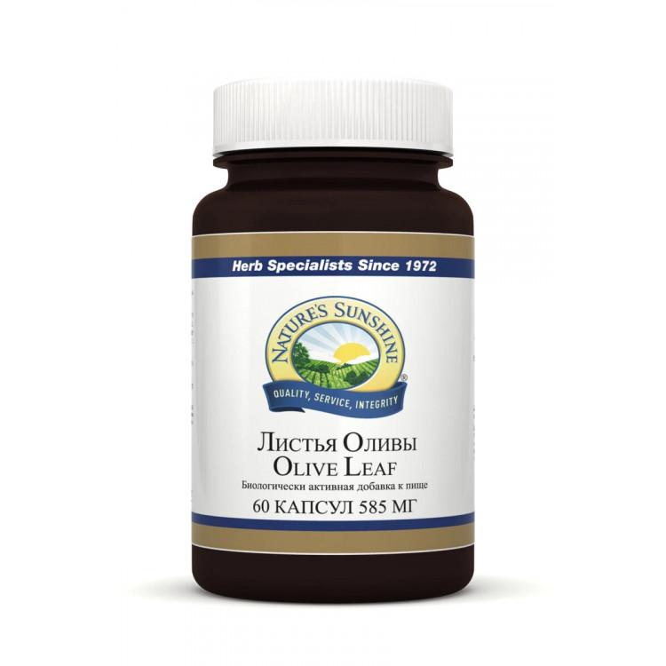 Olive Leaf / Листья оливы 585 мг 60 капсул